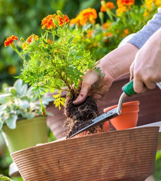 Aménagement jardin, Rixensart, Overijse