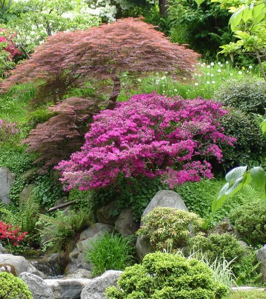 Plantation jardin, feuillages, Rixensart, Waterloo