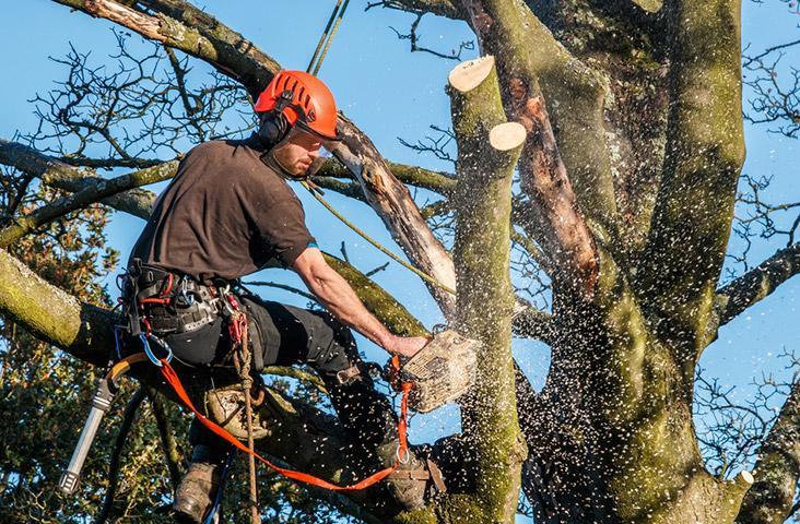 Abattre un arbre, branche, Rixensart