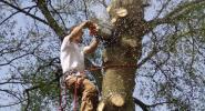 Élagage et démontage d'arbres et/ou branches, Rixensart, Lasne, Barbant Wallon.
