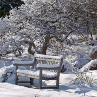 Mon jardin et l'hiver : Entretenir , Plannifier , Reconstruire , ...