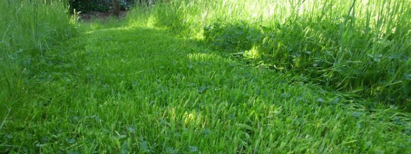 Entretien de jardin et tonte de la pelouse à Rixensart, Wavre, Babant Wallon.
